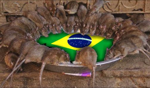 Resultado de imagem para RATOS NO BRASIL