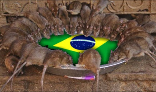 Ratos_Bandeira_Brasil01